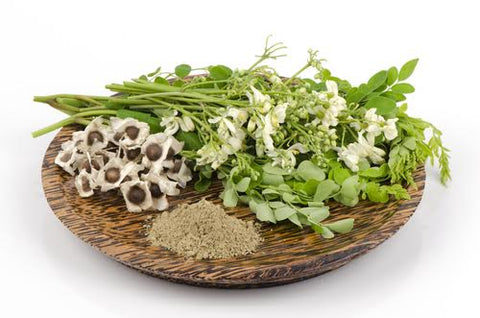 Flower, powder, and seeds of Moringa oleifera