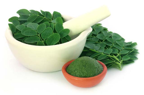 Moringa leaves and powder - Moringa Source