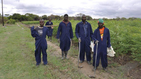 Moringa Farm Workers in Zambia