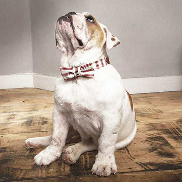 Mutts & Hounds Cranberry Organic Ticking Dog Bow Tie