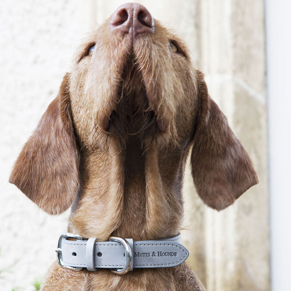 Mutts & Hounds Gray Italian Leather Dog Collar
