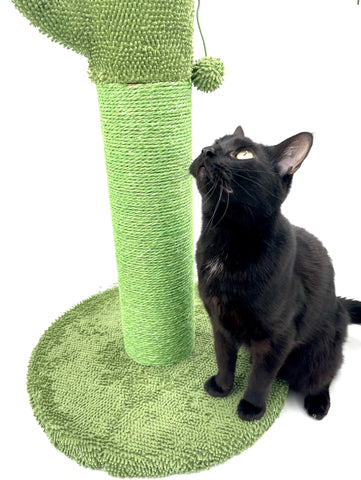 cat playing with frisco scratching post