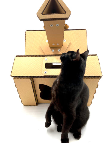 cat in front of cacao pets cardboard tank