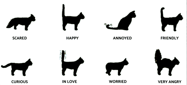 what it means when a cat wags their tail