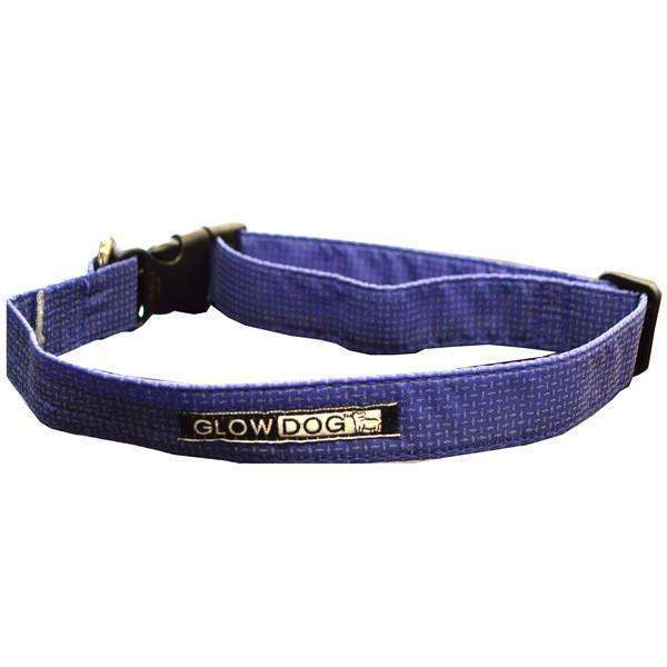 Glow Dog Adjustable Reflective Dog Collar in Blue