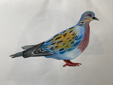 turtle dove drawing