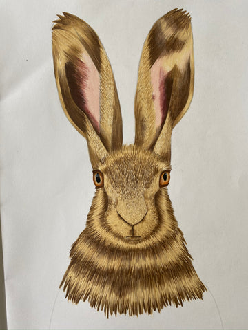 Hare Drawing