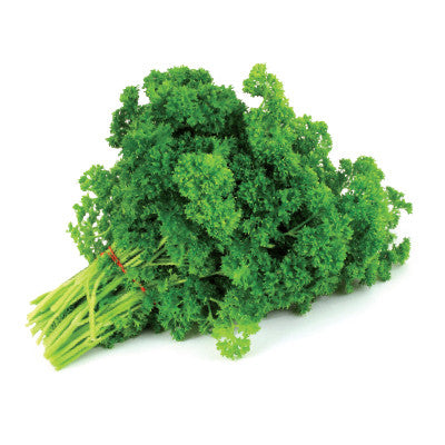 American Parsley Image