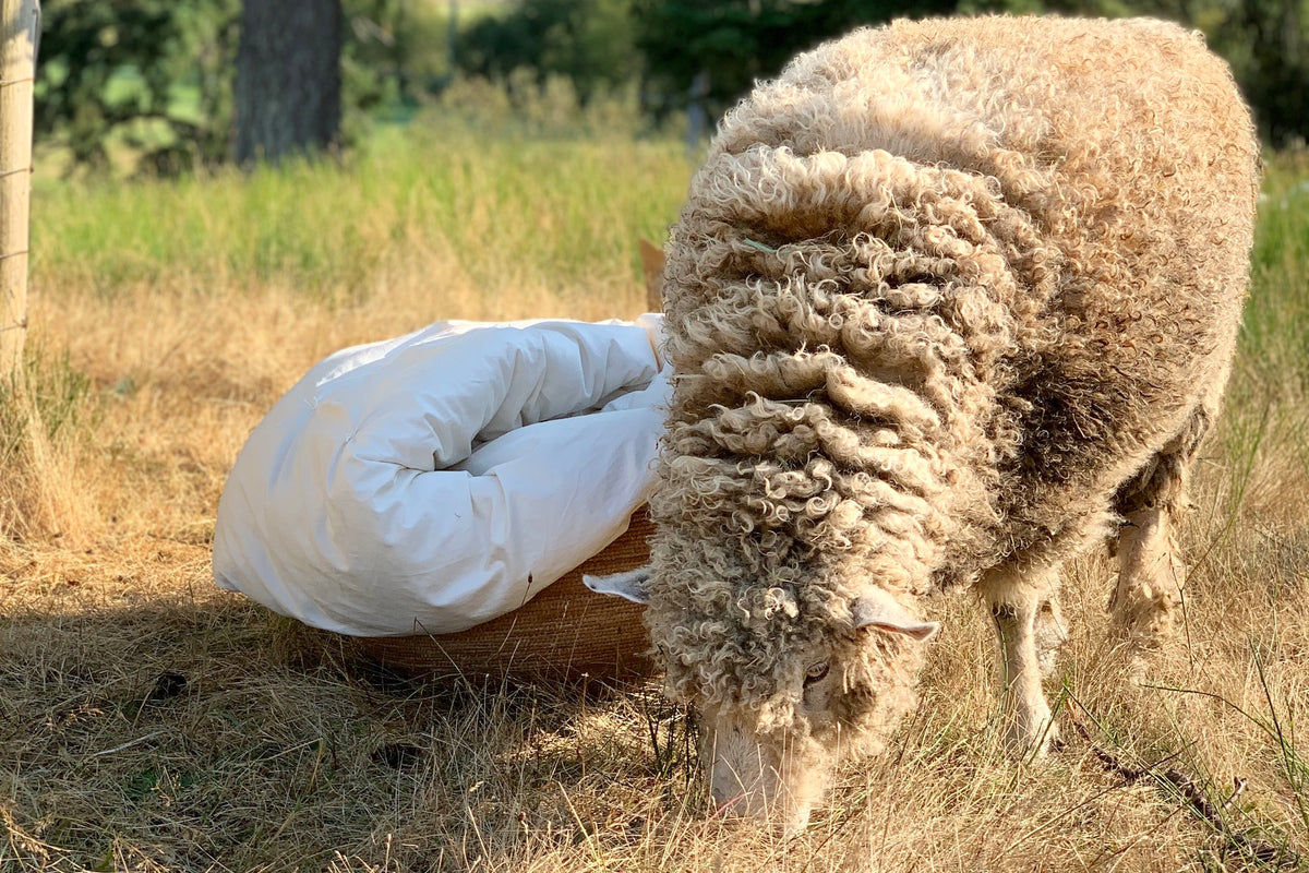 Wool: The Perfectly Evolved Bedding Material