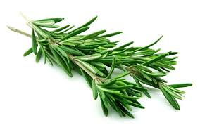 Rosemary Olive Oil (Wild)