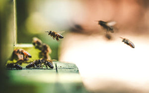 On bee-ing free: racial justice, surviving apocalypse, and paying attention - Ruminate Magazine