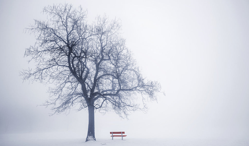 The Mindfulness of Winter Trees