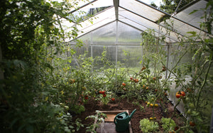 Finding Peace in a Greenhouse