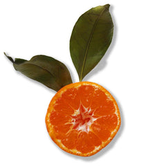 Epionce Lytic Sport Tx from MyExceptionalSkinCare.com contains Orange Fruit Extract