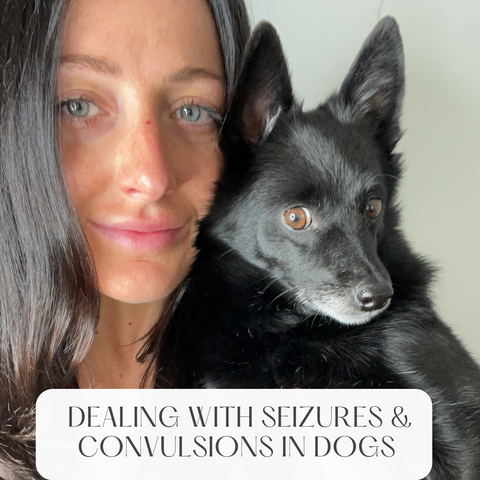 What to do if your dog has a sieizure blog post.