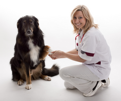 Dog with Veterinary