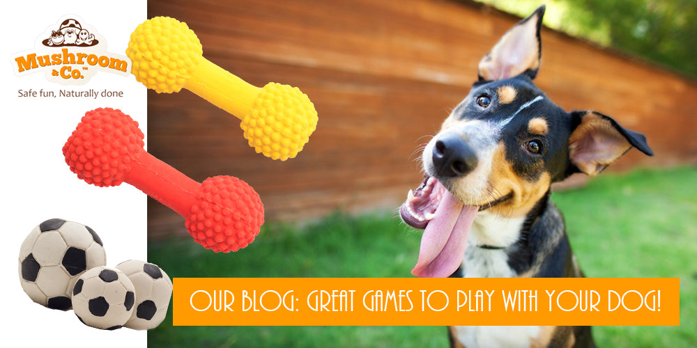 Games to play with your dog | Dog Toys | Organic Dog Chews | Green Dog Toys