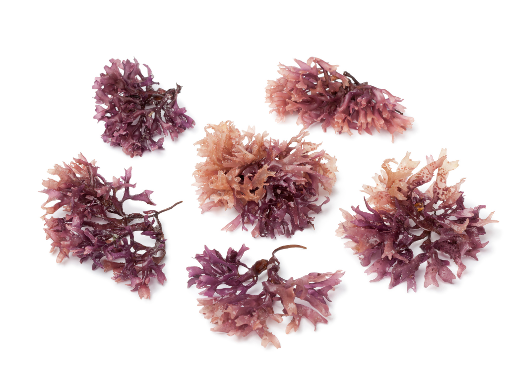 benefits of sea moss for gut health