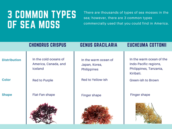 3 different types of sea moss