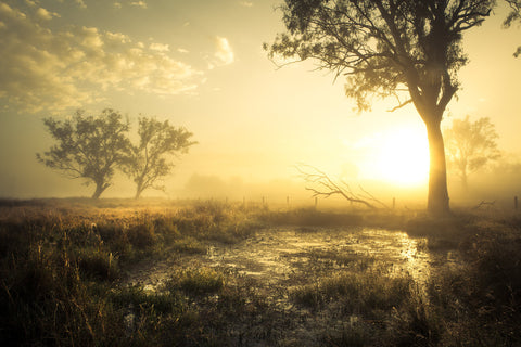 Foggy Morning, Peak Crossing, Queensland