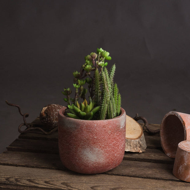Potted Artificial Cacti and Succulent Terracotta Pot