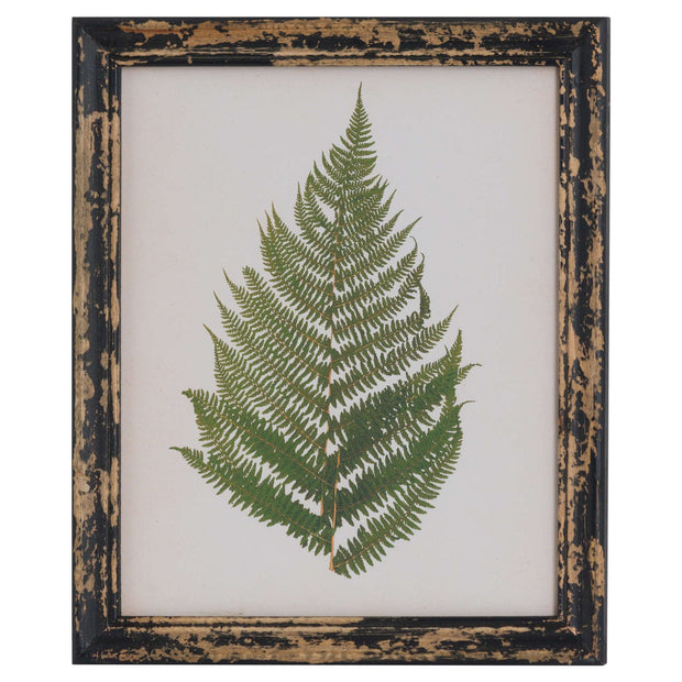 Rustic Framed Botanical Fern Picture