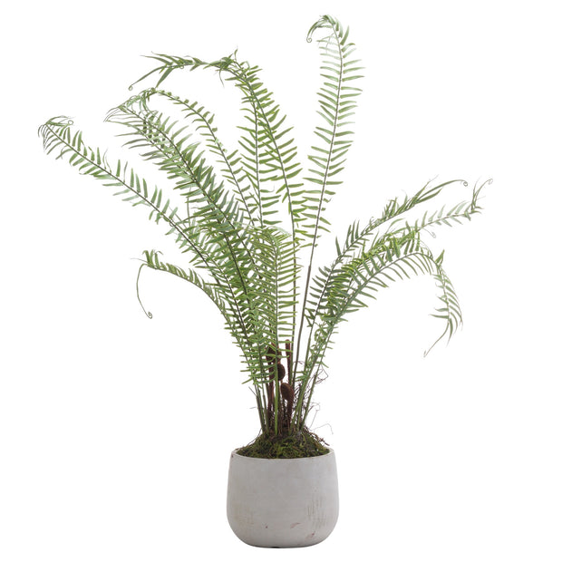 Large Potted Artificial Fern Plant With Concrete Pot