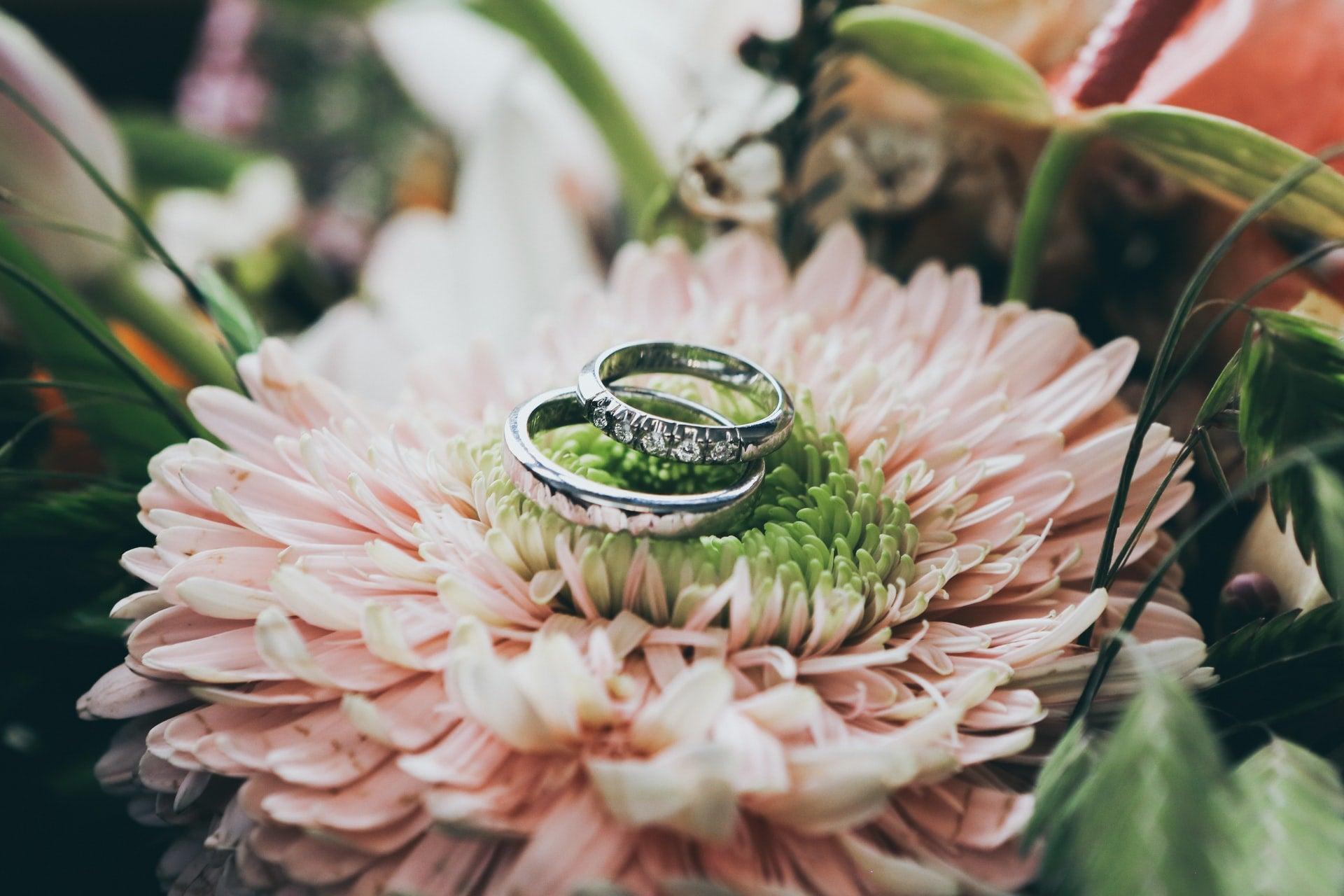 two wedding rings resting on a flower