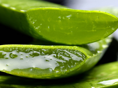How to Make Aloe Vera Gel from The Plant