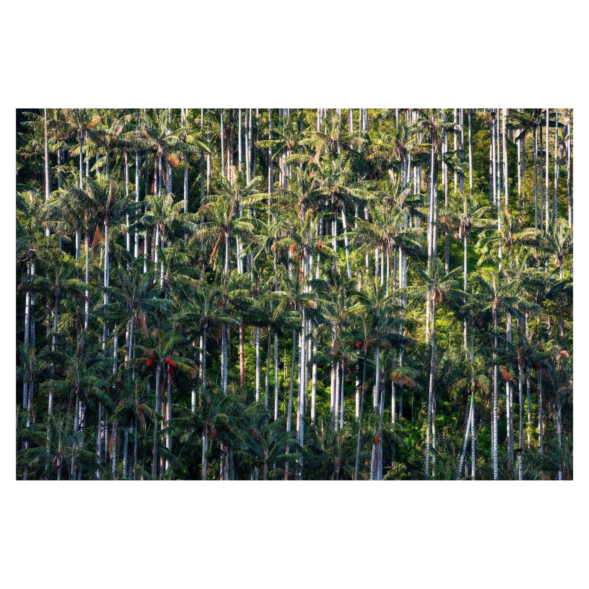 """Colombia: Into the Wild"" Limited Edition Giclée AP"