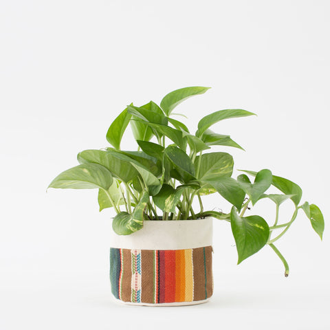 "6"" Natural Canvas Sitting Planter: Brown + Orange"