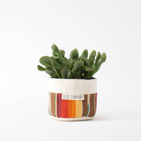 plant decoration indoor home accessories