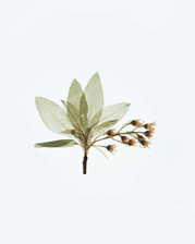 A dried flower and leaf
