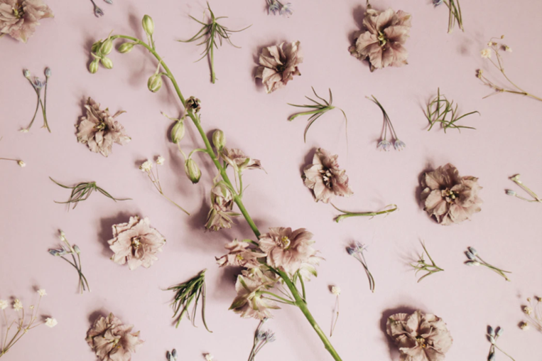 Pink stemmed dried flowers