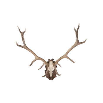 Lodge Furnishings  european, mounts, new item, stags, taxidermy  European Red Stag Mount