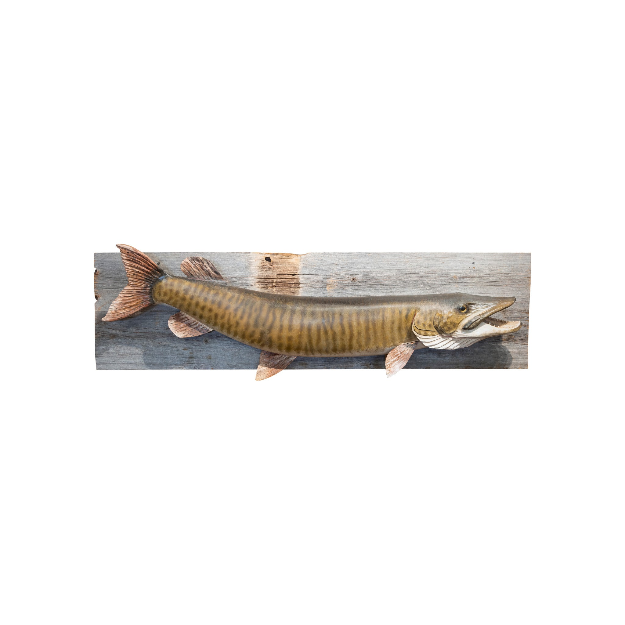 Carved and Painted Muskie Mount borett, carvings, fish mounts, lodge furnishings: taxidermy: fish, taxidermy