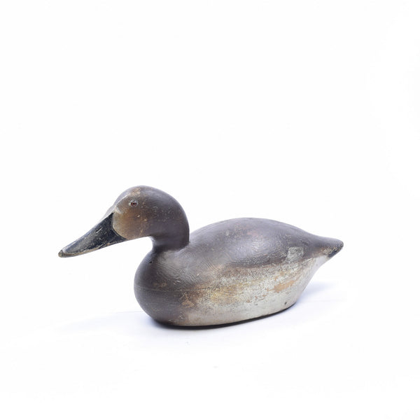 Canvasback Pair