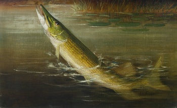 Fine Art  fish, h.a. driscole; oil paintings, paintings-wildlife, pike  Hooked Pickerel by H.A. Driscole