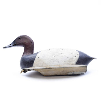 Sporting Goods  canvasback, carvings, duck decoys, frank daroevan, sporting goods: hunting: waterfowl decoy, waterfowl  Canvasback Drake