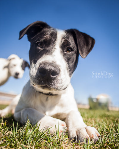 Denver Animal Shelter StinkDog