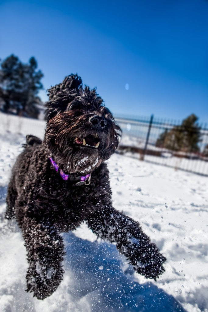 3 Things Your Dog Doesn't Tell You In The Winter