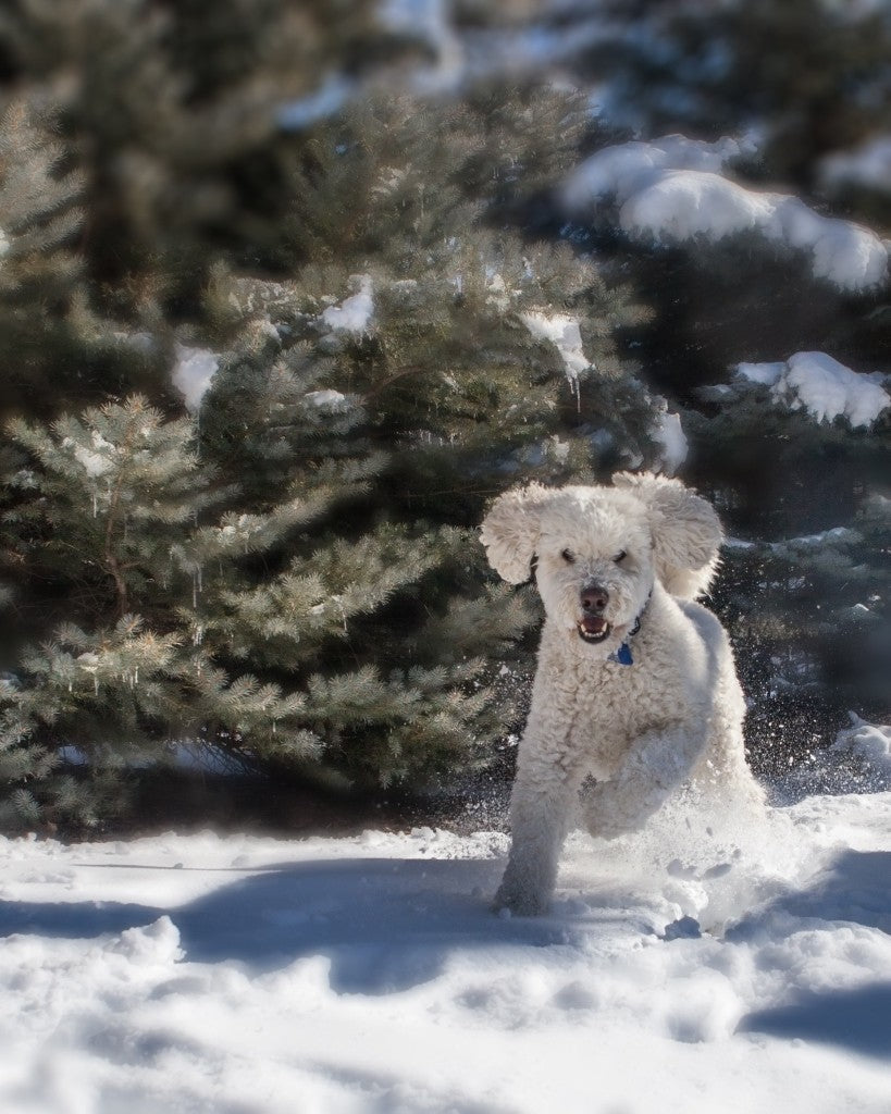 3 Things Your Dog Doesn't Tell You In Winter