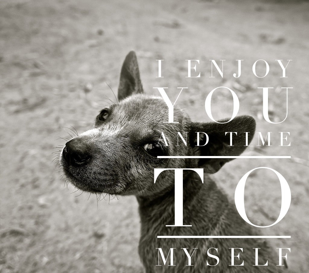 Top Ten Reasons Why It's Best to Adopt An Older Dog