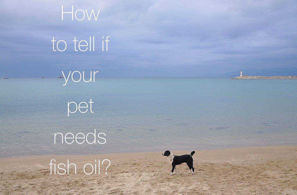 How To Tell If Your Pet Needs Omega 3?