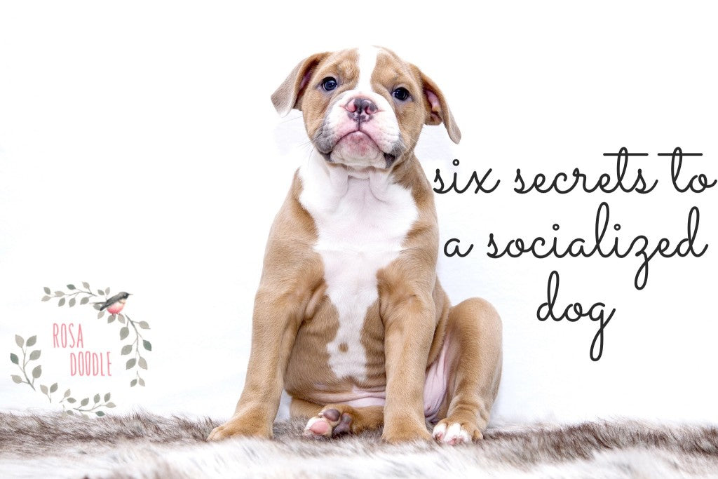 Six Secrets to a Socialized Dog