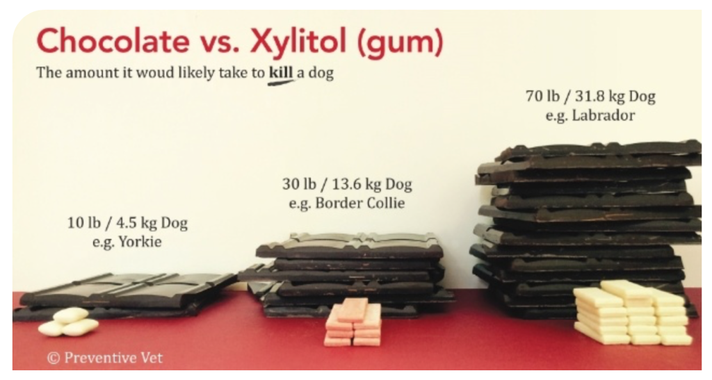 Xylitol Is A Dog Killer & It's In Your Kitchen!