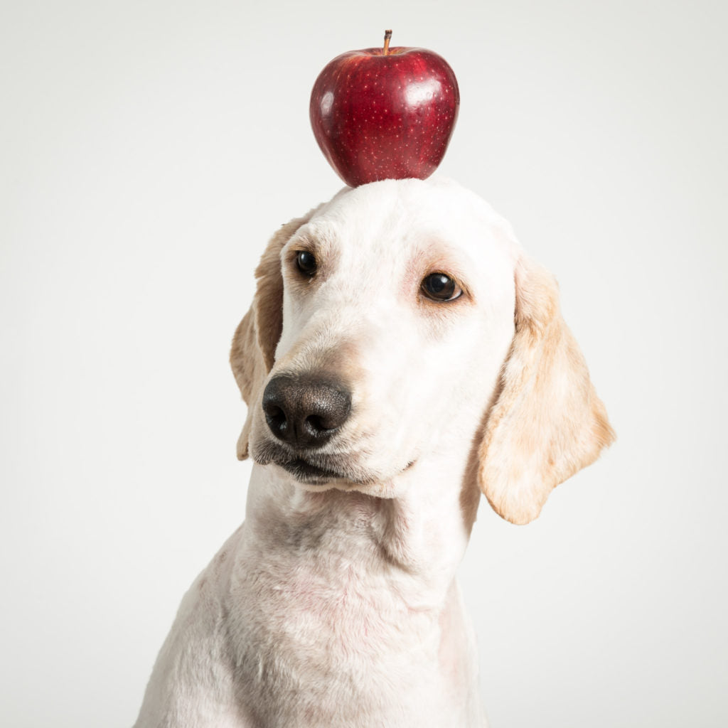 feeding an apple helps with doggie dementia