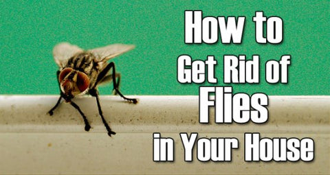 FRUIT FLIES   HOW TO GET RID OF THEM, NATURALLY! – All
