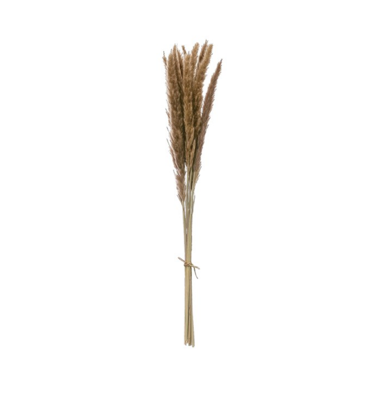 Dried Natural Fountain Grass