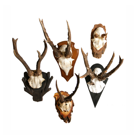 German Antler Mount, Small